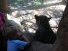 Luke very close to jaguar