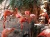 more flamingos