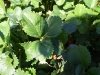 strawberry-picking-014